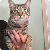 Adopt A Pet :: Taz - Temecula, CA