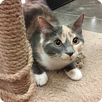 Adopt A Pet :: Calcie - Richmond, VA
