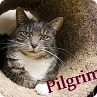 Adopt A Pet :: Pilgrim - Hamilton, MT