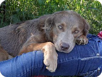 *Bentley - PENDING | Adopted Dog | Westport, CT | Golden ...