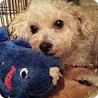 Adopt A Pet :: LUCY - San Dimas, CA