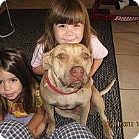 Adopt A Pet :: Honey,loves kids - Sacramento, CA