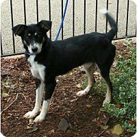 Adopt A Pet :: DolcePENDING - Toronto/Etobicoke/GTA, ON