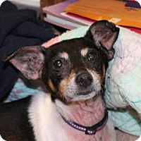 Adopt A Pet :: Allie*ADOPTED!* - Chicago, IL