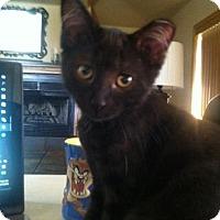 Adopt A Pet :: Bug - Kohler, WI