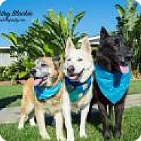 Adopt A Pet :: Blackie, Whitie, and Brownie - Seattle, WA