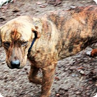 Adopt A Pet :: Charlie Day - Jersey City, NJ
