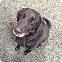 Adopt A Pet :: Buddy & Lucky - Davenport, IA