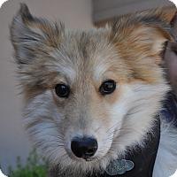 Adopt A Pet :: Shiloh - Atlanta, GA