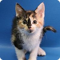 Adopt A Pet :: Margot - Overland Park, KS