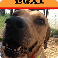 Adopt A Pet :: Lexie - Seattle, WA