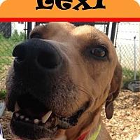 Adopt A Pet :: Lexie - Seattle, WA