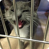 Adopt A Pet :: Fido - Byron Center, MI