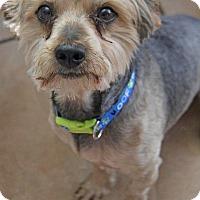 Adopt A Pet :: Flash - Yuba City, CA