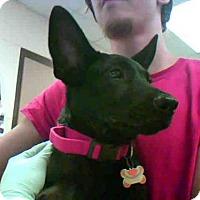 Adopt A Pet :: A275746 - Conroe, TX
