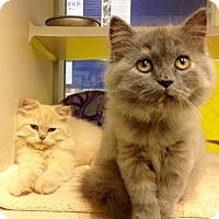 Adopt A Pet :: Paris & Prince - Arlington, VA