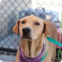 Adopt A Pet :: Halo - Willingboro, NJ