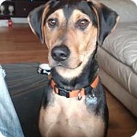 Adopt A Pet :: Cole Porter~meet me! - Glastonbury, CT