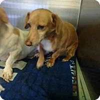 Adopt A Pet :: Roscoe - Lomita, CA