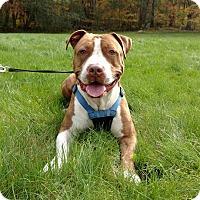 Adopt A Pet :: Hercules - Glocester, RI