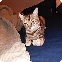 Adopt A Pet :: Lianne - Lincoln, CA