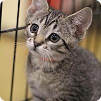 Adopt A Pet :: Loretta - Sacramento, CA