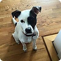 Adopt A Pet :: Cici - St Louis, MO