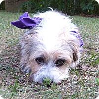 Adopt A Pet :: Betsy - Mocksville, NC