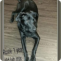 Adopt A Pet :: Roxie - Burnham, PA