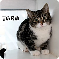 Adopt A Pet :: Tara - Edgewood, NM