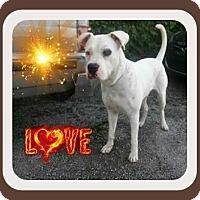 Adopt A Pet :: Brody - Miami, FL
