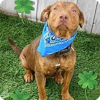Adopt A Pet :: Colton - Umatilla, FL