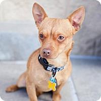 Adopt A Pet :: Czar - Salt Lake City, UT