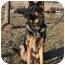 Photo 3 - German Shepherd Dog Dog for adoption in Hamilton, Montana - Adonis-Doni