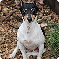 Adopt A Pet :: Nellie - Virginia Beach, VA