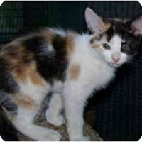 Adopt A Pet :: Macy - Davis, CA