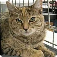 Adopt A Pet :: Rudie3 - Plainville, MA