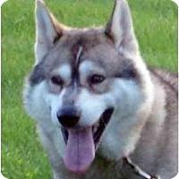 Adopt A Pet :: Bear--HELP! - Belleville, MI