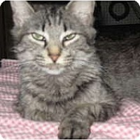 Adopt A Pet :: Sierra - Clay, NY