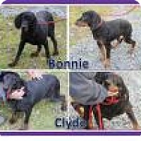 Adopt A Pet :: Bonnie and CLyde - Stafford, VA
