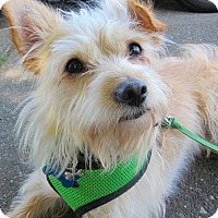 Adopt A Pet :: Terrance - Adoption Pending - Gig Harbor, WA