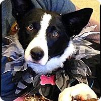 Adopt A Pet :: Portland - Johnson City, TX
