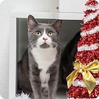 Adopt A Pet :: Violet - Montclair, CA