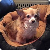 Adopt A Pet :: Bella - Joliet, IL