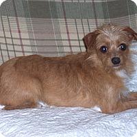 Adopt A Pet :: Ashton - CONOVER, NC