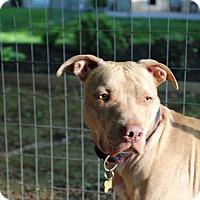 Adopt A Pet :: Tigger - Baltimore, MD