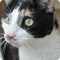 Adopt A Pet :: Spyce - Prince George, VA