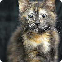 Adopt A Pet :: Beth Reeves	160497 - Atlanta, GA