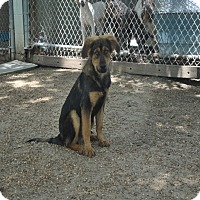 Adopt A Pet :: Ivy 1 meet me 6/10 - Manchester, CT
