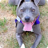 Adopt A Pet :: Tina - Acushnet, MA